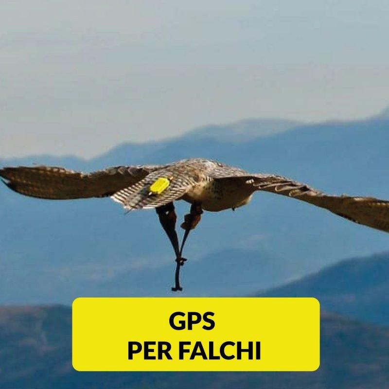 GPS per Falchi